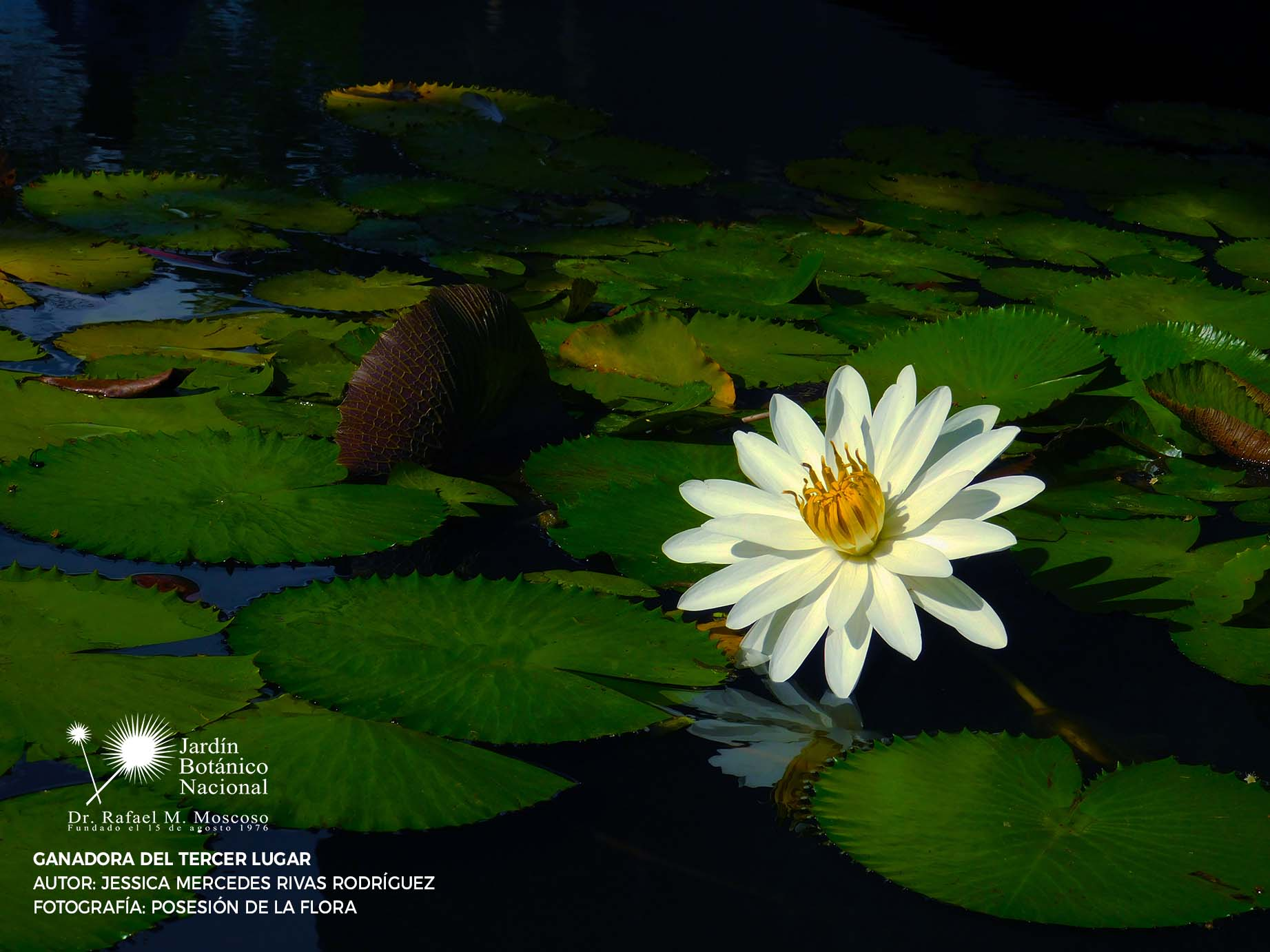 Jardín Botánico Nacional   JBN - Inicio
